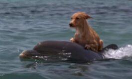 Куче било во вода 15 часа и на работ на смртта, тогаш на помош пристигнале делфините (ВИДЕО)