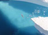 Пливаше под мразот на Антарктик поради климатските промени (ФОТО)