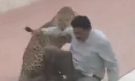 Крвав напад во Индија: Леопард повреди најмалку седум луѓе (ВИДЕО)