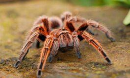 Се плашите од пајаци? Постои едноставно решение за оваа фобија!
